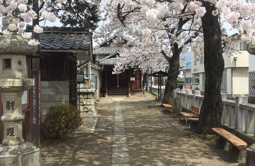 かどっこの角の向こうは見事な桜