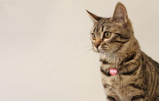 猫の名前にもトレンドがある!