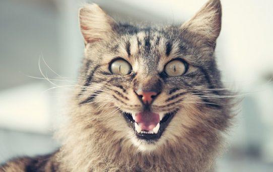 鳴き声に隠された猫のホンネをズバリ!
