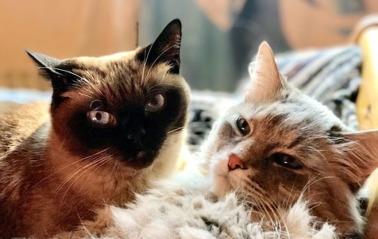 一目瞭然!? 猫の性別は顔で見分けられる!