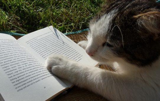 【海外編】猫が出てくることわざ&慣用句