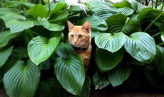 ご先祖様から見る!ペットに進化した猫の歴史