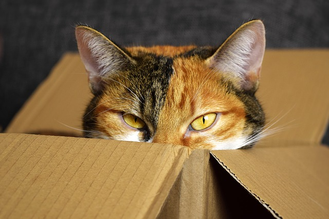 猫は家につく?環境の変化はストレスのもと