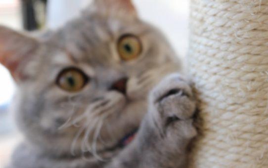 爪を研ぐには理由がある!知れば納得ネコの心理