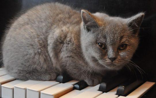 猫を踏むのは日本だけ?「ねこふんじゃった」の豆知識