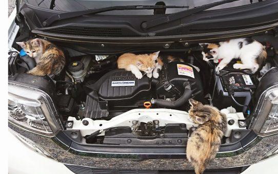 今から乗るクルマは大丈夫? 命を守る「猫バンバン」