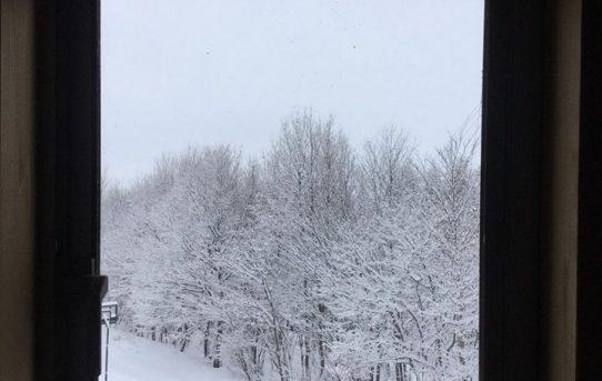 らしい雪景色