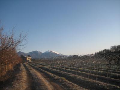 バムとケロの田舎暮らしの寒い朝